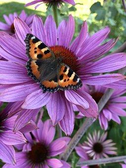 Butterfly, Summer, Flowers, Garden, Colors