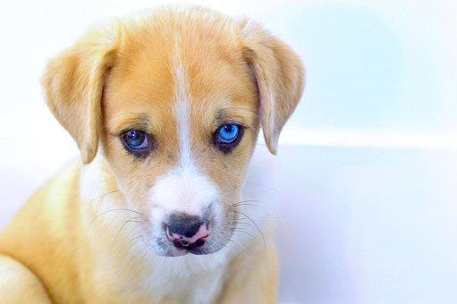 Puppy, Dog, Animal, Sad, Cute, Pet, Adorable, Young