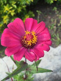 Flor, Vivero, Pasto