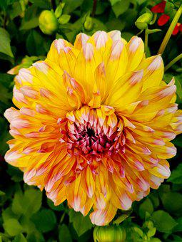 Flower, Bloom, Blooming, Blossom, Botanical, Botany