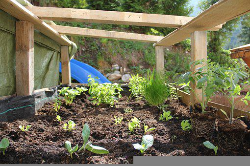 Grow, Plants, Growth, Gardening, Life, Nature, Growing