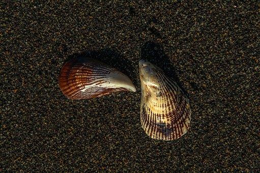 Texture, Sea, Wave, Beach, Nature, Summer, Focus, Ocean