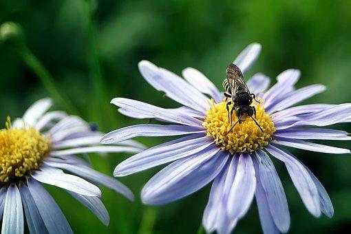 Flowers, Bee, Insect, Plants, Petals, Pollen