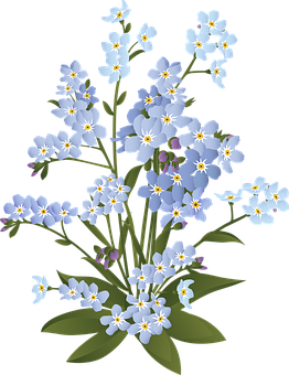 Forget-me-not, Flowers, Plant, Spring, Bloom, Blossom