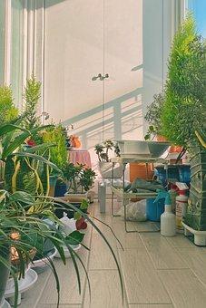 Garden, Indoor, Potted Plant, Green, Nature