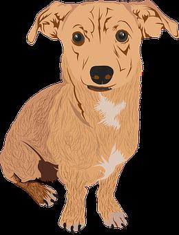 Dog, Chihuahua, Cute Dog, Puppy, Small Dog, Brown Dog