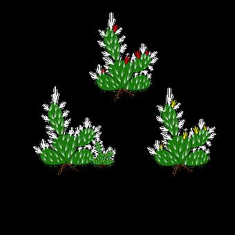 Cactus Plant, Sharp Plant, Succulent, Sharp, Desert