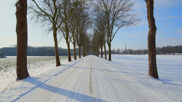 Snow, Avenue, Trees, Fields, Tree Lined, Bare Trees