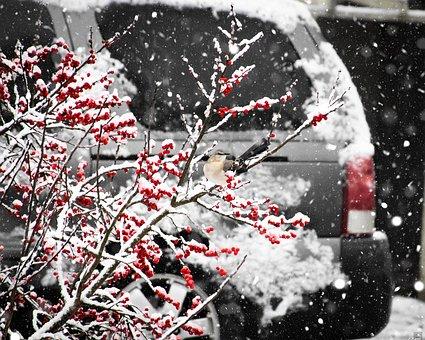 Tree, Berries, Branch, Nature, Winter, Fruits, Fruit