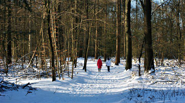 Snow, Forest, People, Pair, Woods, Woodlands, Trees