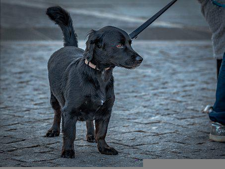 Dog, Pet, Dark, Animal, Cute, Portrait, Puppy, Canine