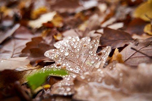 Autumn, Rain, Forest, November, Silent, Rest, Nature