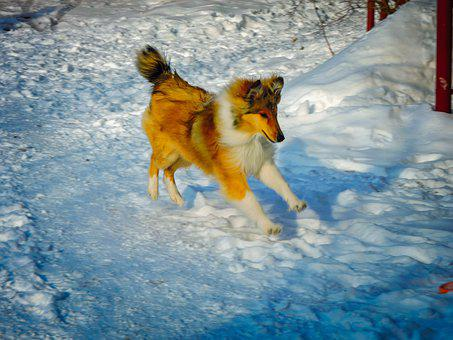 Action, Active, Animal, Background, Beautiful, Breed