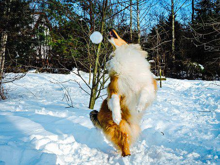 Action, Adorable, Agility, Cold, Collie, Cute, Dog
