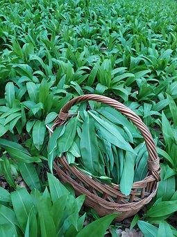 Green, Spring, Bear's Garlic, Nature, Foliage, Plants