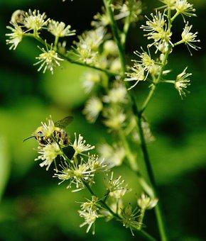 Bee, Insect, Flowers, Honeybee, Bumblebee, Hymenoptera