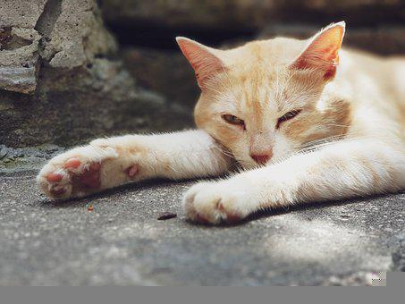 Cat, Portrait, Kitten, Feline, Cute, Adorable, Animals