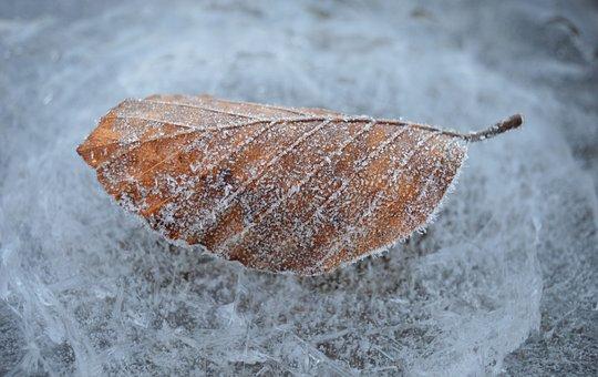 Leaf, Frozen, Ice, Frost, Winter, Cold, Hoarfrost