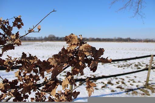 Leaves, Winter, Frost, Nature