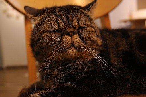 Cat, Sad, Sleepy, Kitten, Animal, Cute, Lazy, Look, Pet
