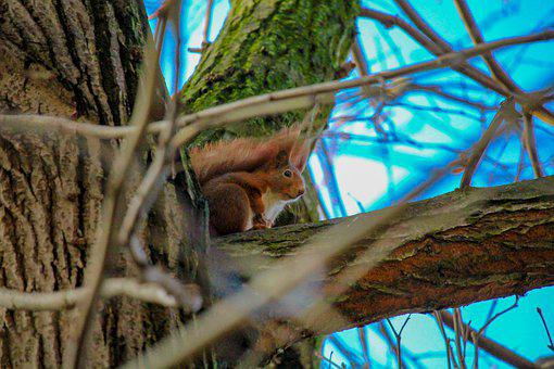 Squirrel, Animal, Nager, Nature, Tree, Sky, Blue