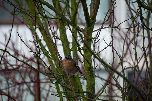 Bird, Tree, City, Nature, Animal, Branch, Forest, Trees