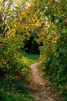 October, Stroll, Forest, Trail, Trees, Autumn, Nature