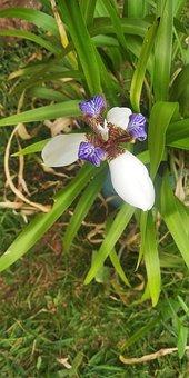 Orquidáceas, Plantas, Verde, Flores, Violeta, Morado