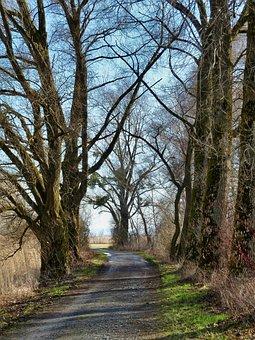 Path, Perspective, Nature, Road, Landscape