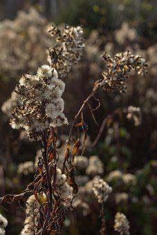 Plant, Branch, Weeds, Dry, Dead Plant, Withered, Autumn