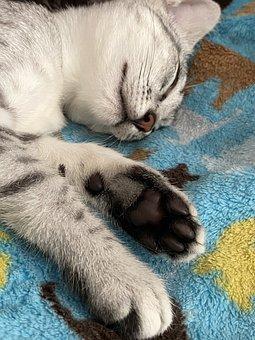Sleeping Cat, Cat Feet, Cat Paws