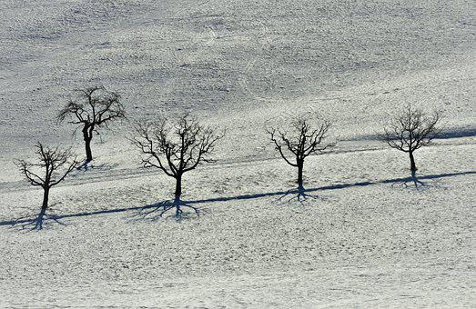 Winter, Snow, Cold, Snowfield, Landscape, Wintry, Trees