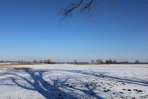 Snow, Shadow, Tree, Wintry, Sky, Landscape