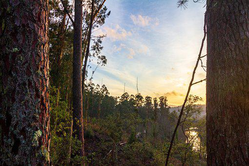 Galicia, Sunset, Forest, Pine, River, Tea, Sky, Trees