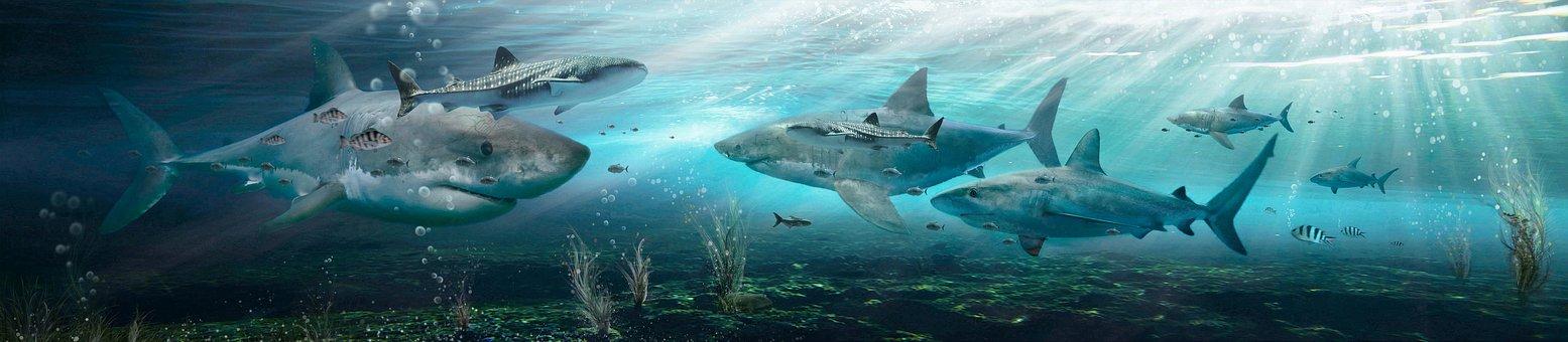 Fish, Sharks, Sea, Water, Ocean, Predators, Underwater