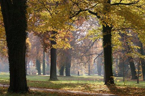 Autumn, Backlighting, Autumn Forest, Mood