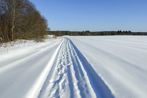 Winter, Trees, Road, Tracks, Landscape, White, Blue