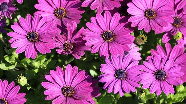 Background, Violet, Flowers, Purple, Closeup, Spring