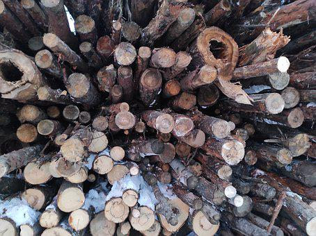 Firewood, Pine, Lumber, Wood, Cut, Storage, Tree