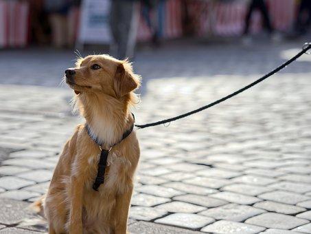 Dog, Cute, Pet, Animal, Mammal, Portrait, Charming