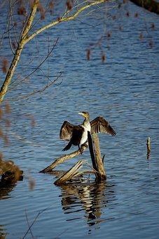 Animal, Bird, Water, Nature, Animal World, Feather