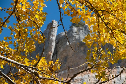 Branches, Leaves, Fall, Foliage, Yellow Leaves, Autumn