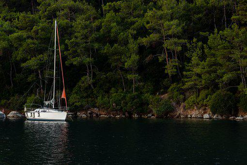 Boat, Sea, Forest, Woods, Woodlands, Sailboat