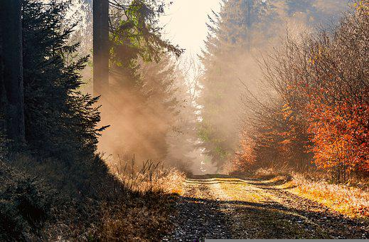 Autumn, Forest, Path, Forest Path, Forest Trail, Trail