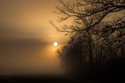 Sun, Morning, Fog, Landscape, Trees, Mood, Sunrise