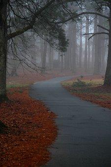 Fog, Path, Trail, Forest, Nature, Autumn, Mist, Trees