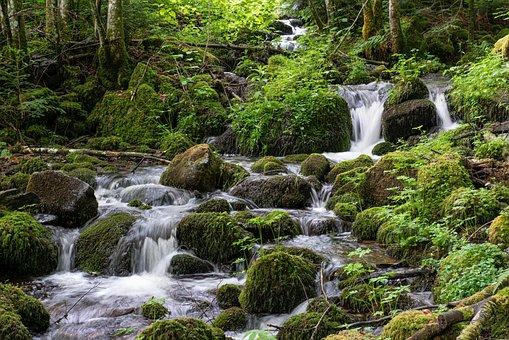 Bach, River, Waterfalls, Nature, Trees