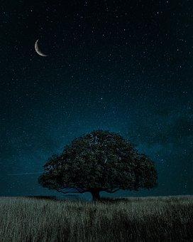 Nature, Moonlight, Night, Sky, Landscape, Mood, Dark