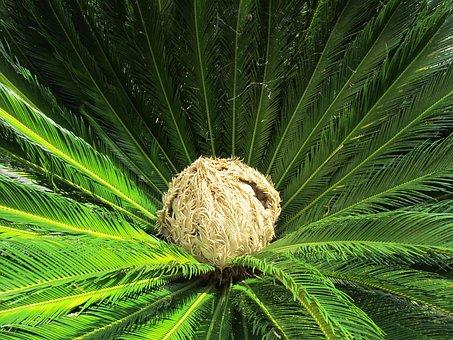 Palm, Palm Heart, Blossom, Bloom, Palm Flower