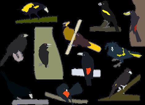 Birds, Cacique, Cacicus, Bird Collection, Perched